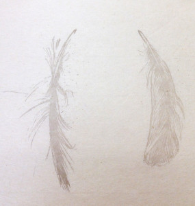 2013feathers