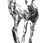 Grandfather's Deer, metal drawing, dimensions variable, 2008